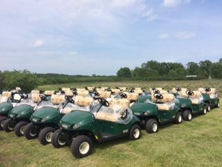 2017 E-Z-Go Fleet Carts