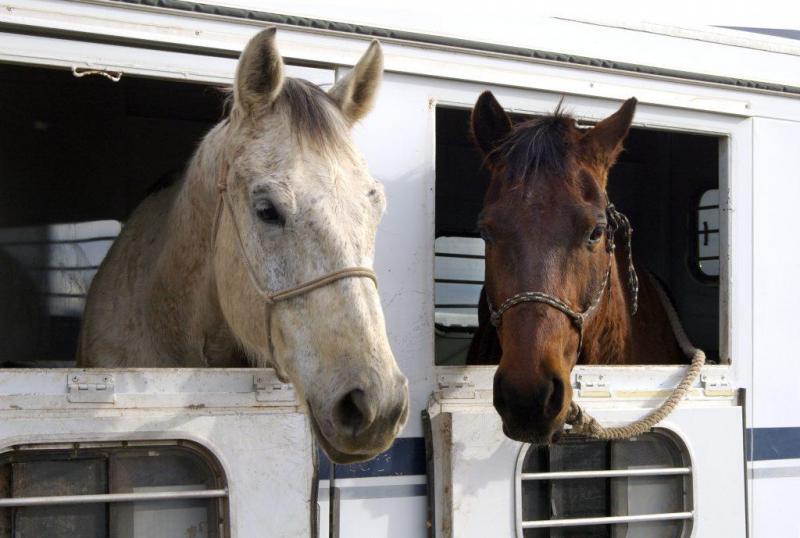 1998 Calico 2 Horse LQ Trailer in Ashburn, VA